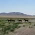 09_Mongolia_002