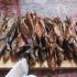 Galerie 10 - Mongolei076
